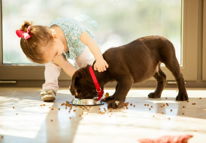 Toddler touching eating puppy doesn't know how to prevent dog bites