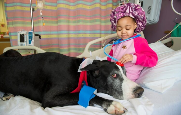 All About Animal Therapy